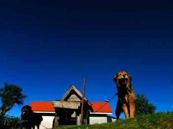 Sandakphu Phalut Tumling