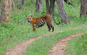 Short Escape to Bandipur Package