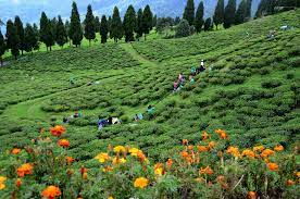 4 Night 5  Days Bagdogra Airport To Silk Route Tour