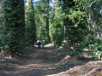 Banglore Mysore Ooty and Coorg Package