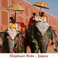 North India Wild Life Tour