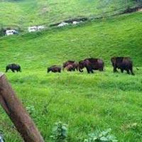 Monsoon Dhamaka Kerala Tour
