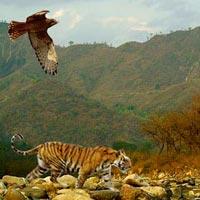 Best of Uttarkhand Tour