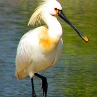 Ranganathittoo Bird Sanctuary