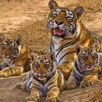 Ranthapur National park