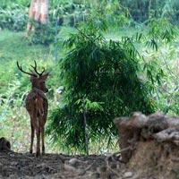 Deer park @ Varanasi