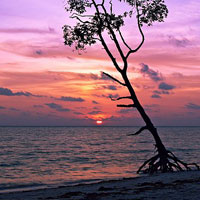 Andaman Exotic Beach Package Tour