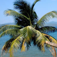 Andaman Beach Honeymoon Package Tour