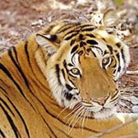 Wildlife Tour Rajasthan