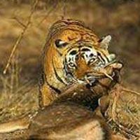 Natural wonders in Madhya Pradesh Tour