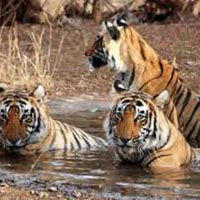 Delhi-Sariska National Park Weekend Tour