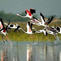 Bharatpur Weekend Tour frm Delhi