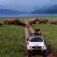 Delhi-Corbett National Park Weekend Tour