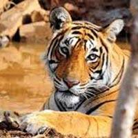 Jaipur - Ranthambore 2N 3D Tour