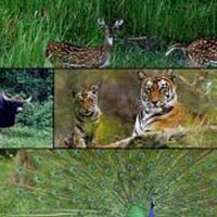 Wildlife and Heritage Tour 5 Day