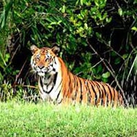 Sunderban With Exotic Kolkata Tour