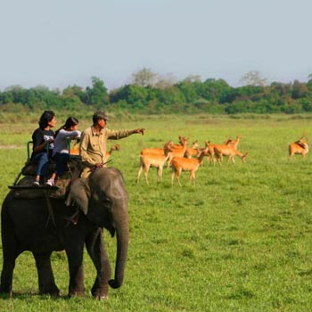 Kaziranga National Park, Manas National Park, Pabitora Wildlife Sanctuary Tour