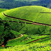 Leisure Honeymoon Trip - Munnar Tour
