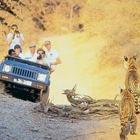 Wildlife Safari, Ranthambore