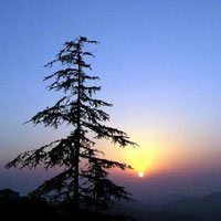 Shimla - Kullu - Manali Package Tour