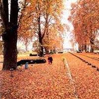 Splendid Kashmir Tour