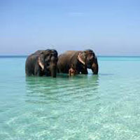 Port Blair - Havelock - Baratang Island Tour