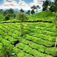 Honeymoon Coorg Package from Bangalore - 2 Nights/ 3 Days