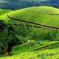Cochin - Munnar - Alleppey Package (3 Nights / 4 Days)