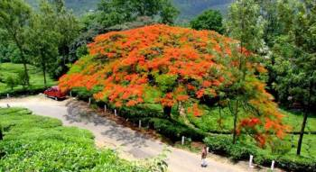Munnar Honeymoon Package Ex Madurai 2 Nights 3 Days