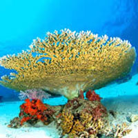 Andaman Budget Tour Package