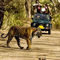 New Delhi - Nainital - Jim Corbett Tour