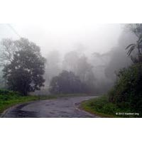 Hill Station - Wayanad / Coorg
