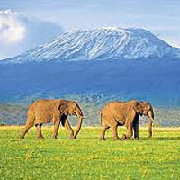 Beach Holiday - Kenya Tour (5 D & 4 N)