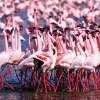Best of Kenya Safari Tour (8 D & 7 N)