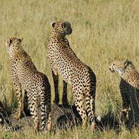Discover Kenya Safari Tour (4 D & 3 N)