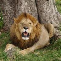 Mara Special Lodge Safari - Kenya Tour (3 D & 2 N )