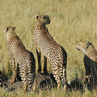 Olpejeta - L.Nakuru - Maasai - Nairobi - Kenya Tour (6 D & 5 N )