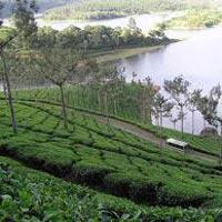 Cochin - Athirappally - Vazhachal - Munnar - Thekkady - Kumarakom Tour 6 Days & 5 Nights
