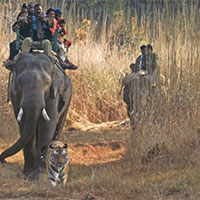 Jabalpur - Bandhavgarh - Pachmarhi 5 Nights / 6 Days