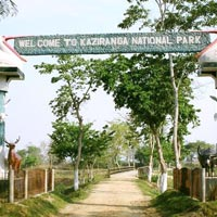 Guwahati - Kaziranga National Park Tour - 4 Days & 3 Nights