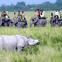 Guwahati - Shillong - Cherrapunji - Kaziranga National park Tour - 6 Days & 5 Nights