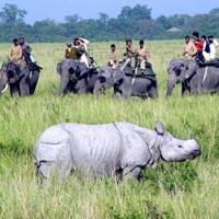 Best of the East (Guwahati-Kaziranga National Park- Shillong-Cherrapunji- Guwahati)