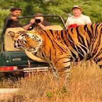 Tiger Trail Circuit by Semi Luxury Tourist Train