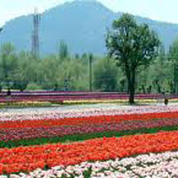 Jammu & Kashmir Holiday Tour Package