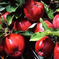 Tour to Valley of Apples