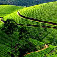 Kerala Hills with Wildlife Tour