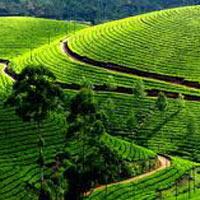 Kerala Hills with Wildlife Tour