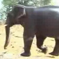 Rajasthan Wildlife Safari our Package