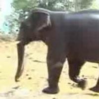 Wildlife Tour Of Rajasthan