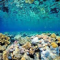 Mesmerizing  Andaman ( 5N/6D) Package